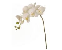 Orchidea Real Touch Piccola Primavera Pasqua