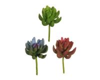 Pachyveria Succulent Pz 3 Pianta Verde Composizione Floreale