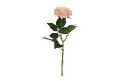 Rosa Ecuador Alta 65 Cm Rosa Antico