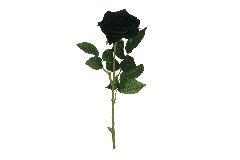 Rosa Ecuador Alta 65 Cm Nera