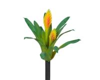 Pianta Cactus Cm 32 Decorazione Fioristi Real Touch