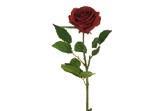 Rosa Ecuador Alta 65 Cm Rossa