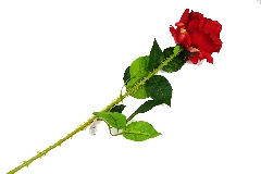 Rosa Rossa Grande C/spine Cm 78 Fiore Artificiale Da Composizione