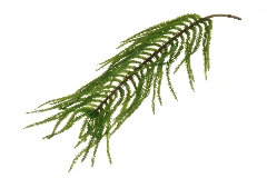 Ramo Araucaria Soft Touch Cm 75 Pianta Artificiale