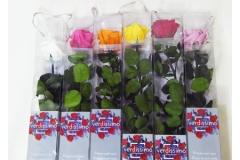 Rosa Naturale Stabilizzata