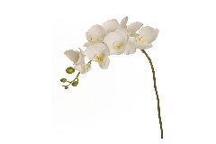 Ramo Orchidea Real Touch 8 Fiori