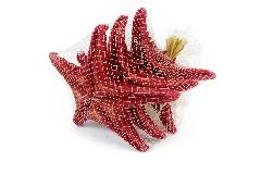 Pz 3 Stella Marina Rossa Naturale Grande Cm 20 Decorazione Linea Mare