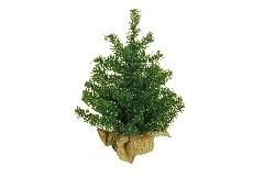 Pino Sacco Cm 44 Albero Di Natale